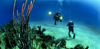 Cold Water Diving