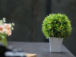 Plants That Are Best Known To Remove Toxins From Air